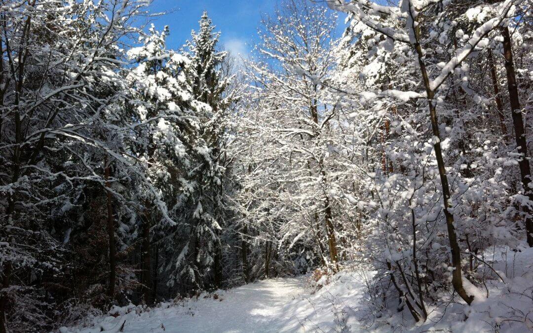 Wanderwege in den Vogesen – das Elsass zu Fuß entdecken