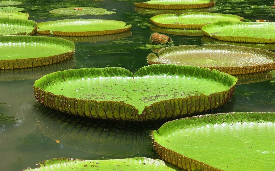 Der Botanische Garten Straßburg – eine wunderschöne grüne Oase