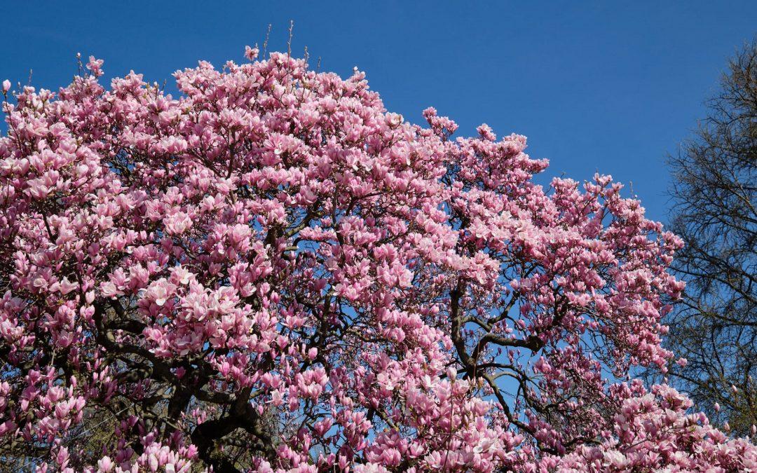Ostern im Elsass. Oster- und Frühlingsmärkte in der Region laden ein
